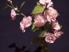 Gałązka z kwiatami jabłoni - kwiaty z bibuły
