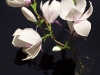 Gałązka magnolii - kwiaty z bibuły