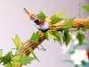 Kosz Wielkanocny - dekoracja z kwiatów z bibuły