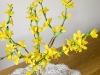 Gałazki forsycji - kwiaty z bibuły